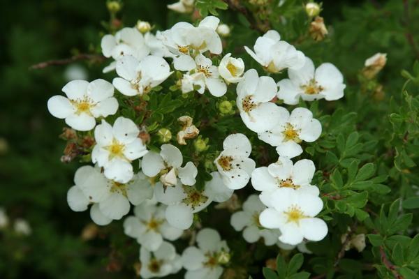 gyógyító virág