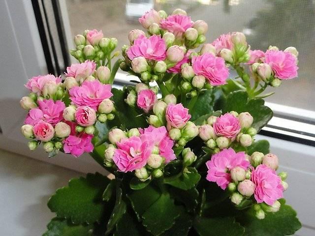 ružová vanka mokrá