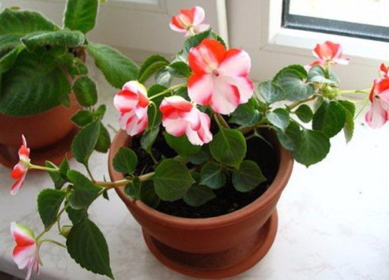 kvetina v kvetináči