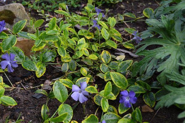 Plantă de vindecare