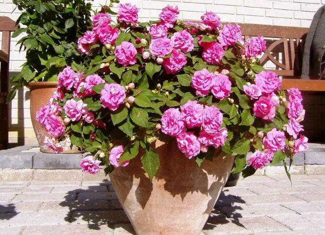 kvety v kvetináčoch na tirass