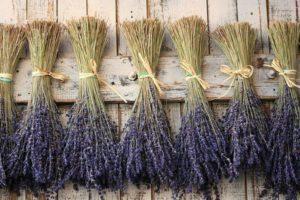 Hoe kun je lavendel thuis drogen, timing van verzameling en voorbereiding