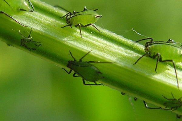 insecten otaka