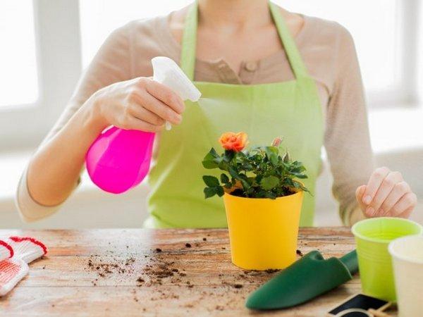 Výsadba, pestovanie a starostlivosť o kvetinu Vanka Wet doma