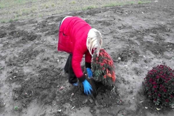 ásni jobbra