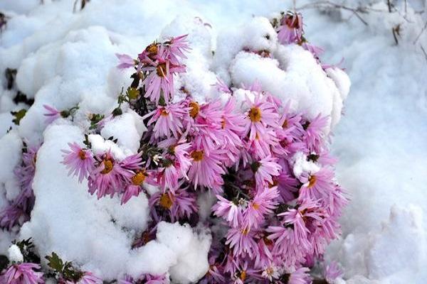 virágok a hó alatt