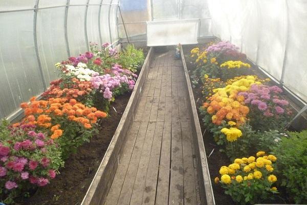 üvegházhatású virágok