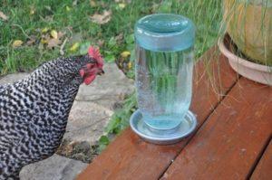 Csirke ivóváladék-típusai és telepítése, hogyan kell csinálni?