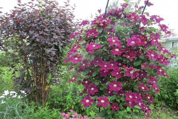 záhradný dizajn