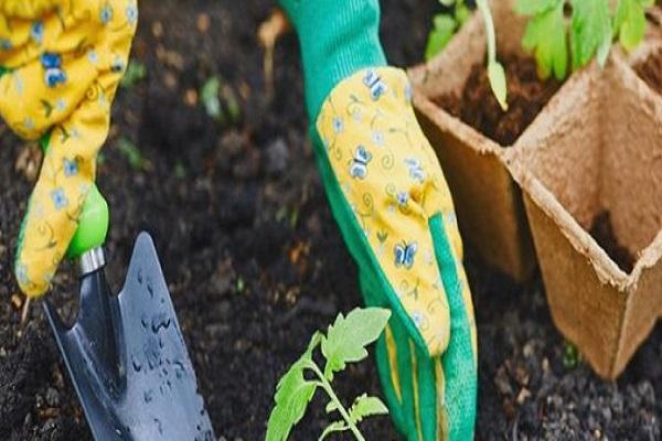 sadnja biljke