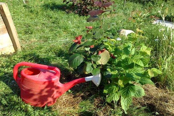 fertilizante puede
