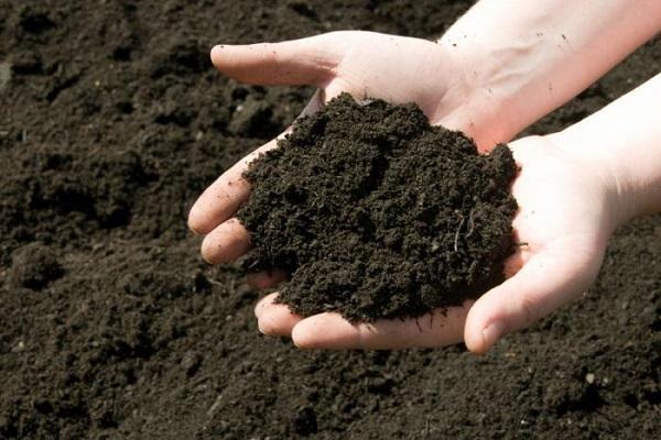 tiszta fekete talaj
