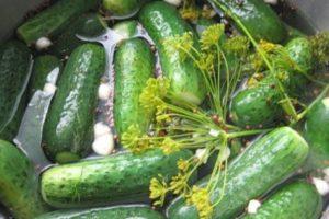 A top 11 recept az enyhén sózott uborka számára tormalevelekkel és fokhagymával