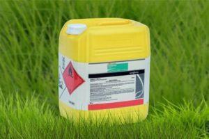 Instrucciones de uso y principio de funcionamiento del herbicida Treflan, tasas de consumo.