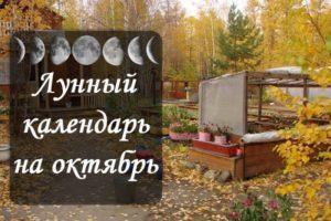 Calendrier des semis lunaires du jardinier et du jardinier, tableau des travaux pour octobre 2020