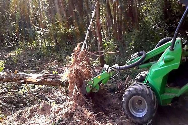 A legjobb módszerek a fafajták megszabadulására az oldalon