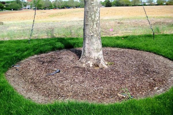 csomagtartó talajtakaró