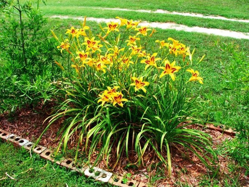 narancssárga virágok