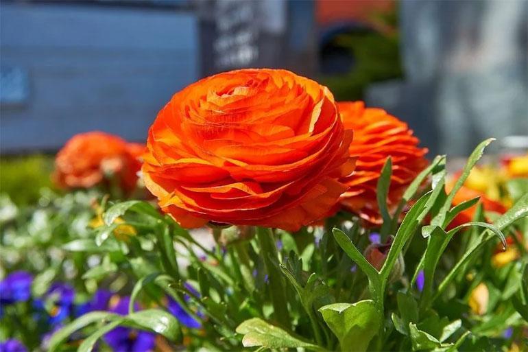 gyönyörű virág