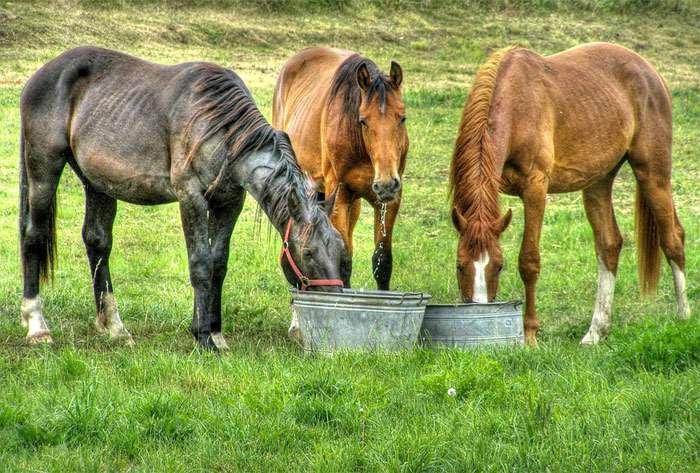 telivér lovas