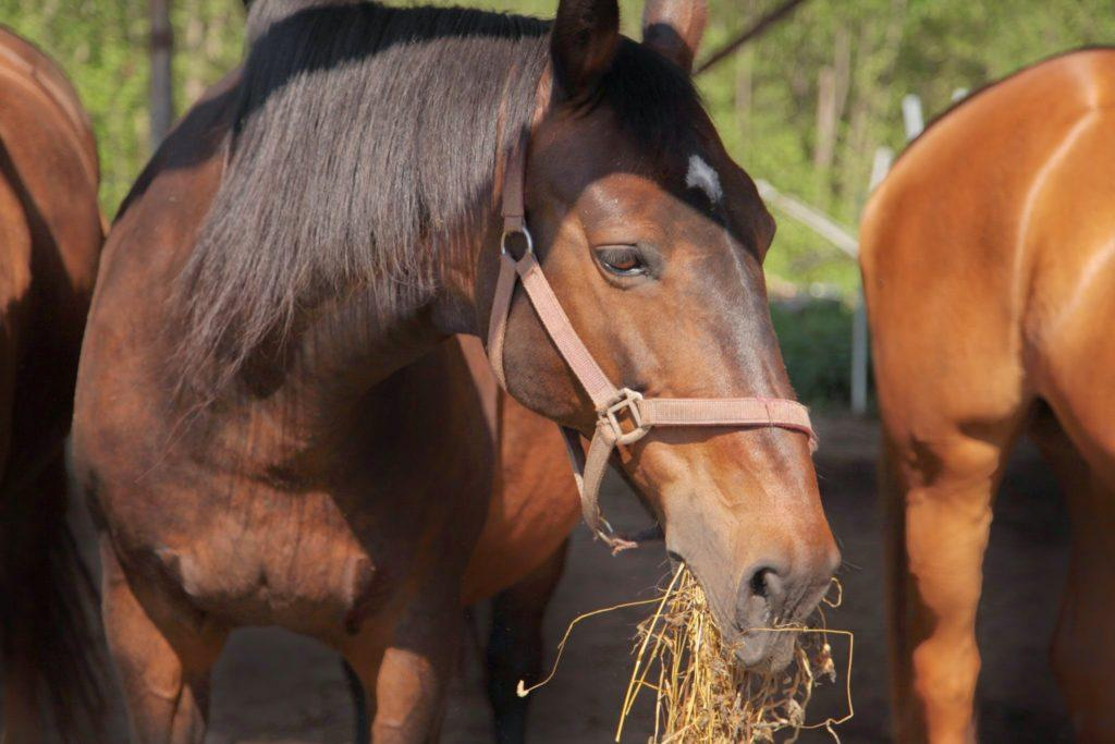 etetés lovak