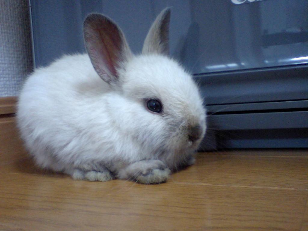 pequeño conejo