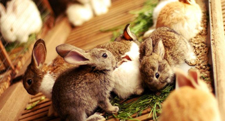 alimentando conejos
