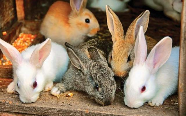 diferentes conejos