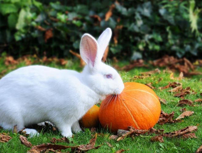 conejo y calabaza
