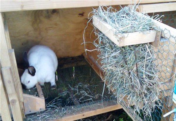 percha para conejos