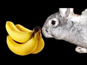 ¿Se pueden dar plátanos a los conejos y cómo es correcto, los beneficios y daños de la fruta?