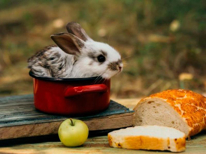 pan y conejo
