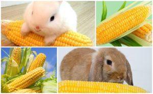 Qué verduras y frutas se pueden dar a los conejos, reglas de alimentación y qué no