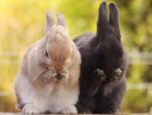 ¿Qué comen los conejos domésticos, tipos de comida y reglas de alimentación para principiantes?
