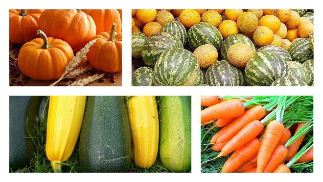 sok zöldség