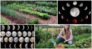 Odporúčania pre záhradníkov do roku 2021 podľa mesačného sejacieho kalendára