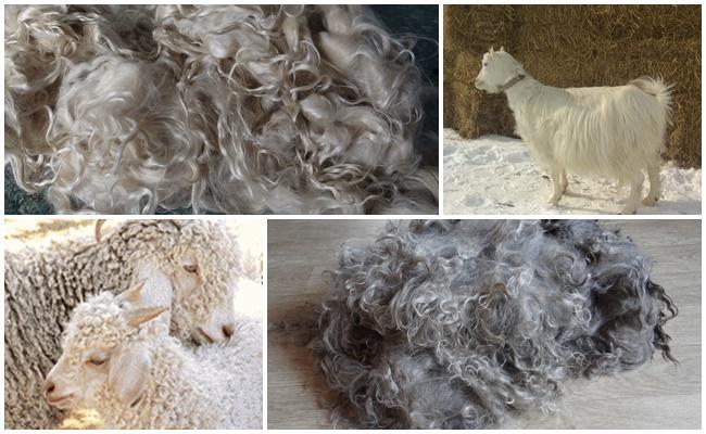 kozie vlasy