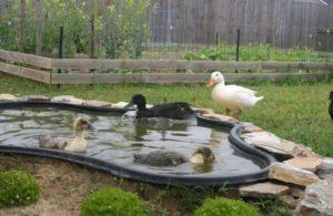Ako vytvoriť dom pre kačice doma vlastnými rukami, kresbami