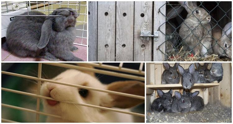conejo mastica una jaula